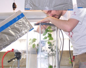 Plant and leaf chamber studies at CREAF, Barcelona